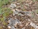 Komárkova lesostep