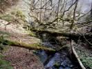 Podmokelský potok